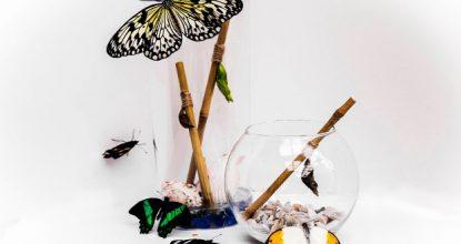 Домашние бабочкарии