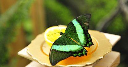 Аренда бабочек