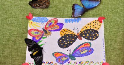 Итоги конкурса «Вот это бабочка»