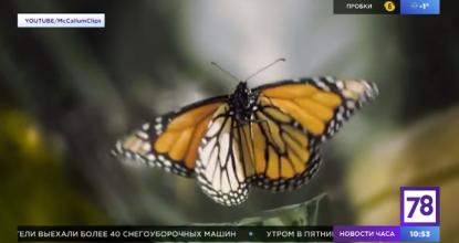 Наши бабочки в прямом эфире!