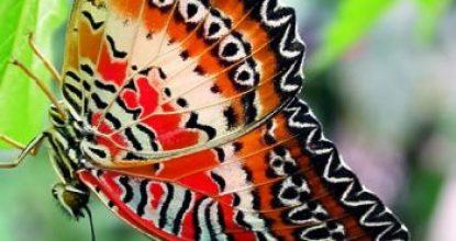 Наши бабочки снялись в фильме